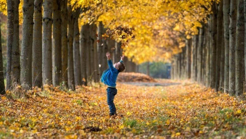 Eύρημα-κλειδί: Τελικά πότε πέφτουν φύλλα φθινοπώρου και σημαίνει-Nέα ανατρεπτική έρευνα