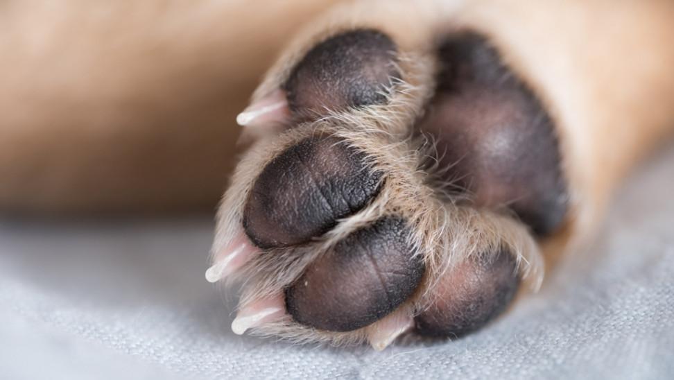 Νομοσχέδιο για ζώα συντροφιάς: Ψηφίστηκε επί της αρχής - Οι απόψεις των φορέων
